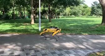 Spot, de angstaanjagende robot die in de parken van Singapore patrouilleert zodat veiligheidsafstanden gehandhaafd worden