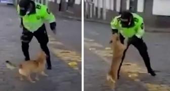 Le chien errant ne peut s'empêcher de remercier le policier qui lui apporte de la nourriture en plein confinement