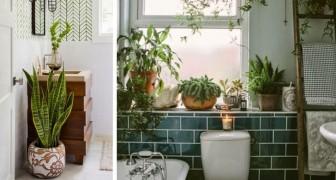 13 ideeën om inspiratie op te doen om de badkamer te voorzien van prachtige planten