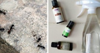 How to make an ant repellent using ingredients you find around the house