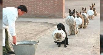 Diese Polizeihunde, die sich zum Fressen anstellen, sind viel ordentlicher und geduldiger als wir Menschen
