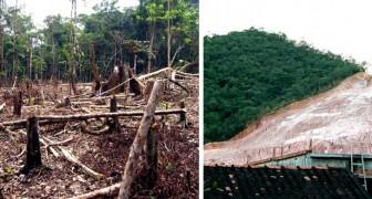 La pandemia non ferma la deforestazione in Brasile: rispetto al 2019, le aree distrutte sono raddoppiate