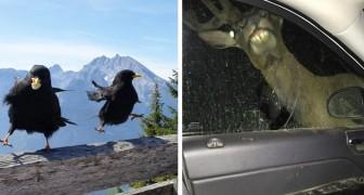 12 volte in cui le persone hanno scattato foto di animali selvatici con risultati disastrosi