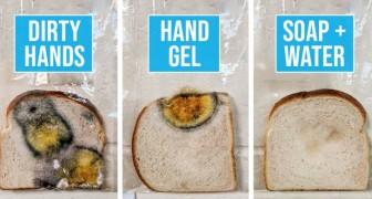 L'expérience de cette enseignante montre clairement ce que cela signifie de ne pas se laver les mains et de toucher ensuite le pain