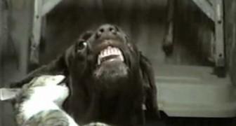 Ces bibis sont tellement doux qu'ils en font sourire le chien! :-D