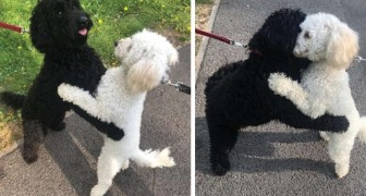 Twee honden uit hetzelfde nest ontmoeten elkaar na een lange tijd en het lijkt erop dat ze elkaar meteen herkennen