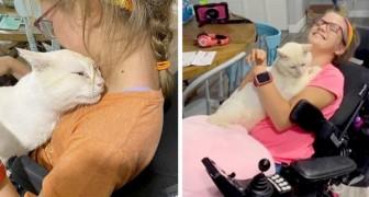 Een wantrouwende kat wordt geadopteerd door een meisje in een rolstoel: er ontstaat een bijzondere vriendschap tussen hen