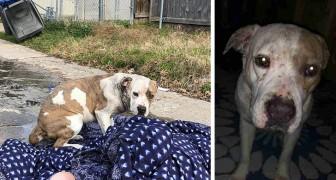 Una cagnolina abbandonata ha aspettato per giorni il ritorno della sua famiglia rannicchiata su una coperta