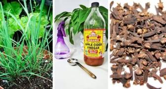 7 economici rimedi fai-da-te per preparare repellenti naturali contro formiche e insetti