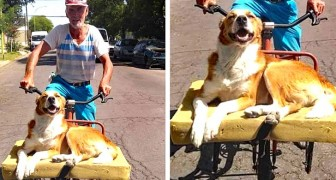 He builds a comfortable bicycle bed for his dog: the animal's expression repays his effort