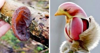 20 fotografie che dimostrano come Madre Natura sia una maestra nel confondere l'occhio umano