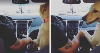 The dog sits the wife in the back seat and then holds the husband's hand: the scene is hilarious