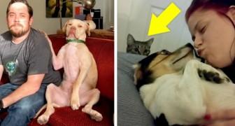 20 bezaubernde Aufnahmen zeigen uns, wie eifersüchtig Tiere auf ihre Menschen sein können...
