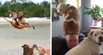 Queste 20 foto dimostrano che i cani possono illuminare anche la giornata più triste
