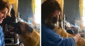 Esta cachorrinha viajou mais de 60 km para abraçar a mulher que a salvou
