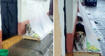 Uma família generosa instala uma barraca de plástico fora de casa para proteger os cães de rua da chuva