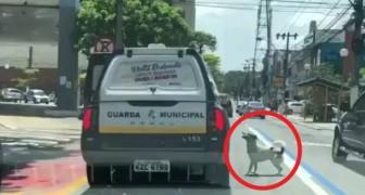 Un senzatetto viene arrestato: il suo fedele cagnolino insegue la macchina della polizia per non lasciarlo solo