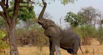 Otto elefanti sono stati uccisi in Etiopia in sole 24 ore: un triste record per l'Africa orientale