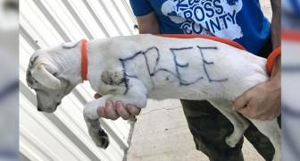 Una donna abbandona una cagnolina e scrive Gratis sulla sua pelliccia con un pennarello indelebile