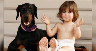 A Doberman sacrifices himself and saves an infant girl from a poisonous snake