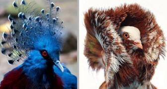 14 tra le specie di piccione più colorate ed eleganti che esistano al mondo