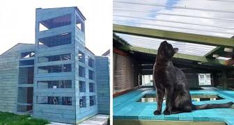 Un ragazzo costruisce per i suoi gatti una delle case più imponenti e memorabili che si siano mai viste