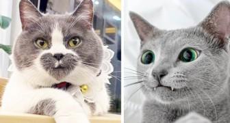 22 gatti che Madre Natura ha dotato di imperfezioni indimenticabili