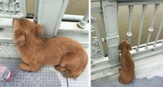 A little dog waits for his master for days on the bridge where he took his life: he continues to hope that he will return