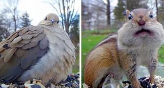 Une femme installe une caméra dans sa cour pour saisir toute la beauté des animaux sauvages en gros plan