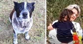 An old deaf and blind dog protects a 3 year old girl lost in the woods helping rescuers find her