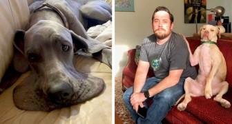 20 cani che hanno messo in scena delle situazioni esilaranti a loro insaputa