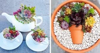 10 magnifiche composizioni con le piante succulente per arredare in modo originale qualsiasi ambiente