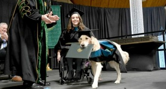Guide dog gets an honorary degree for accompanying his owner to class: now that she gets to graduate, so does he