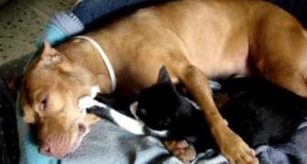Den här relationen motsätter sig alla fördomar om att katter och hundar inte kommer överens. Riktigt sött!