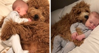 Every day, this baby boy falls asleep in the arms of his canine siblings, and the photos are adorable