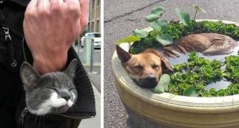 16 animaux domestiques qui se sont subitement endormis dans les endroits les plus impensables