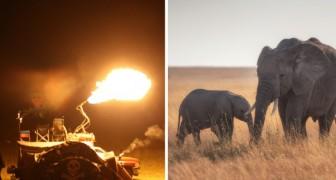 Un'elefantessa e il suo cucciolo vengono scacciati con il fuoco: la deforestazione li aveva spinti verso i campi coltivati