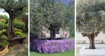 11 idee brillanti per incorniciare un albero d'ulivo con fantastiche aiuole adatte a vari tipi di giardino