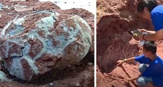 En kille upptäckte av en slump ett bo med 11 stycken dinosaurieägg medan han lekte i närheten av en flod