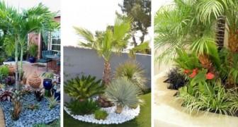 10 proposte da cui trarre ispirazione per decorare il giardino con le palme e creare un'atmosfera esotica