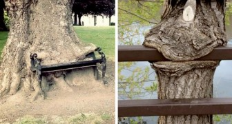 """15 bomen die het niet konden laten om alles wat ze tegenover zich hadden """"op te eten"""""""