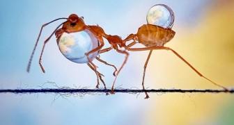 Una fotografa cattura il fascino invisibile delle formiche che trasportano gocce d'acqua su un filo di spago
