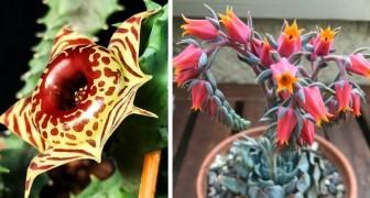 14 foto di piante succulente affascinanti che raramente capita di vedere nei comuni vivai