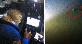 Mariannengraben: Am tiefsten und entlegensten Punkt der Erde wurde eine Plastiktüte gefunden