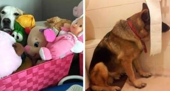 15 cani che hanno provato a nascondersi dai loro proprietari ma sono riusciti solo a farli ridere