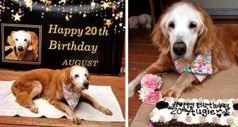 Den äldsta golden retrievern i världen har fyllt 20 år och är en riktig rekordhund