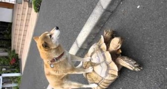Non avete mai visto un cane farsi dare un passaggio da una tartaruga?