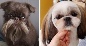 15 leuke foto's van honden met uitbundige kapsels nadat ze naar de trimsalon zijn geweest