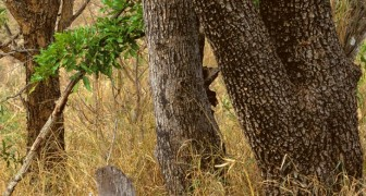 Try out this fun visual test: look for the leopard hidden in the image