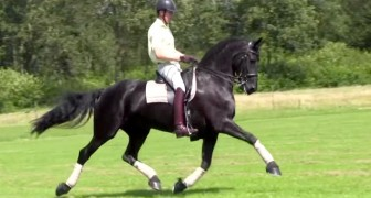 The beauty and elegance of this horse will leave you speechless